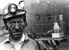A canary in a coal mine