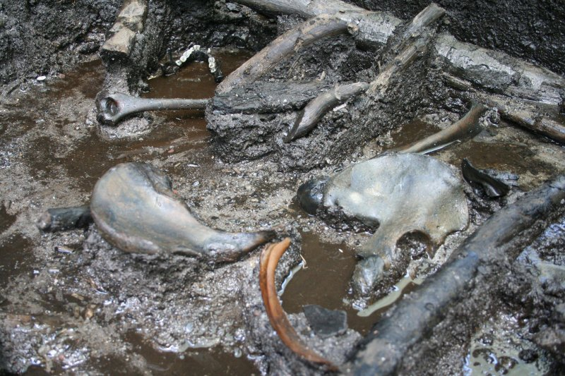 the bog bodies and what they Archaeologists have learned a lot about the lives of iron age europeans from the mummified remains preserved in bogs--including how they dressed.