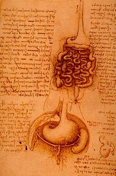 kroppens anatomi billed